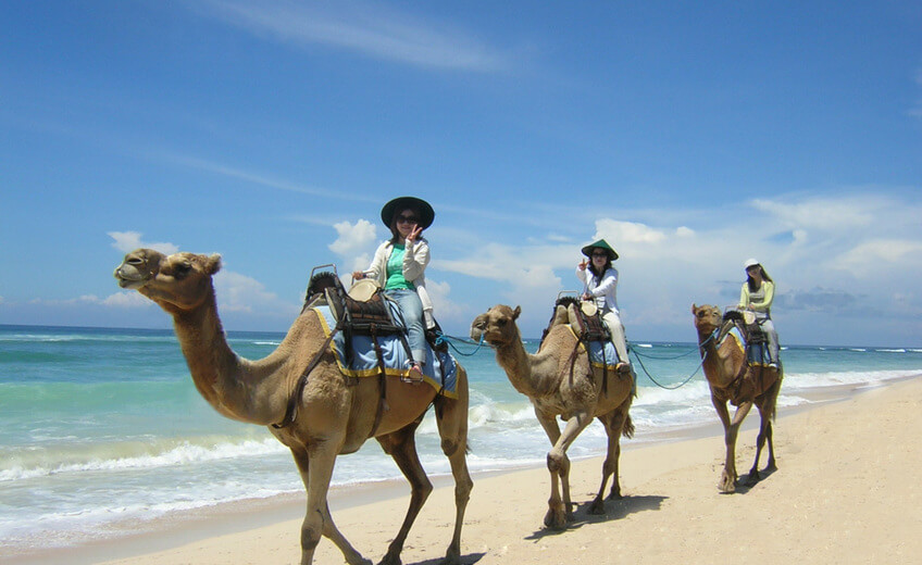 Camel Ride & Wellness Package