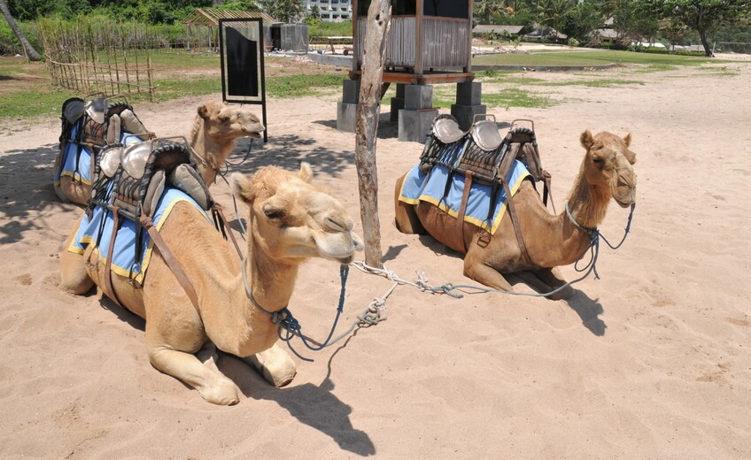 Camel Ride & Watersports Package