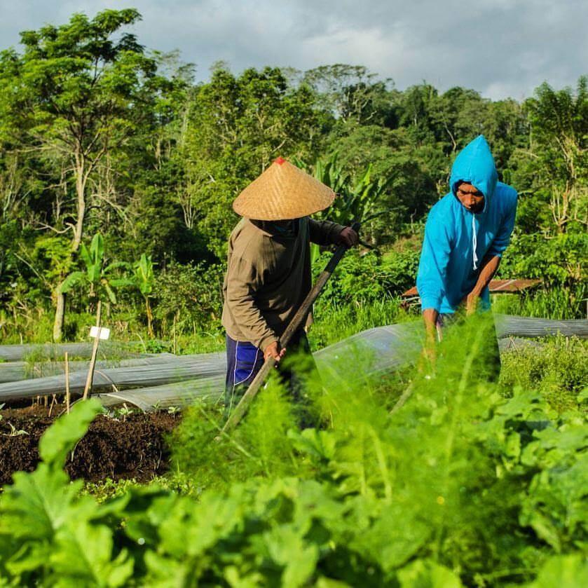 Island Organic Bali
