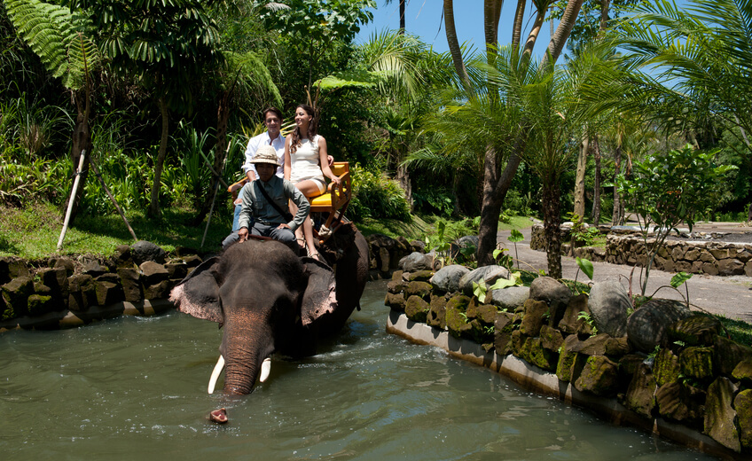 Elephant Back Riding And Bali Zoo Admission