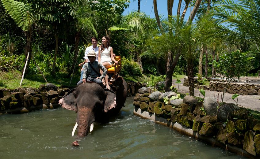 Elephant Back Riding And Bali Zoo Admission