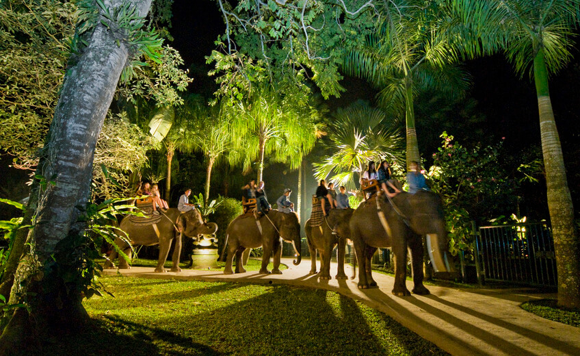 Elephant Safari under the Stars
