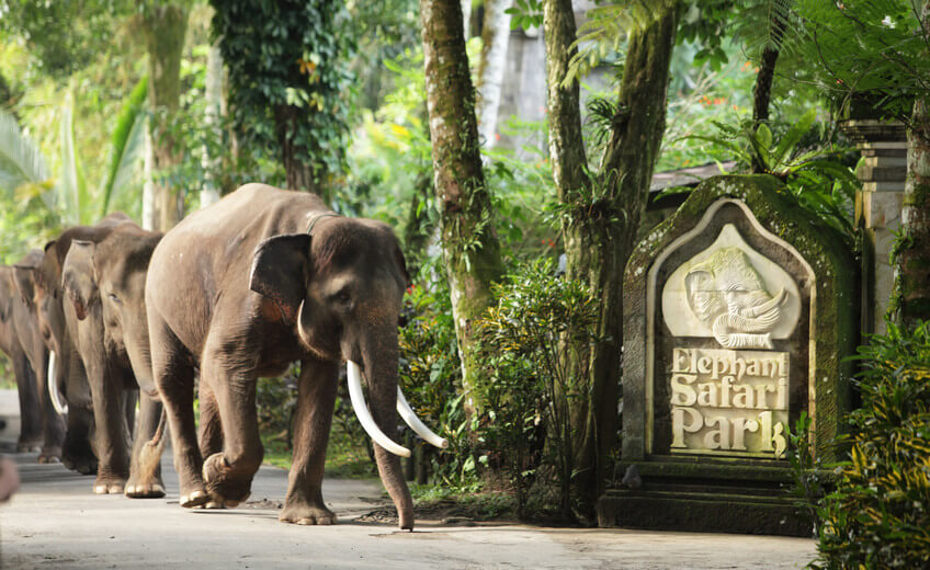 Elephant Safari Park and Ride Tour