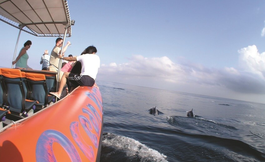 Dolphin Cruise Along the Coastline of Nusa Dua