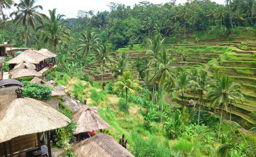 Ubud & Rice Terrace Tegallalang Tour