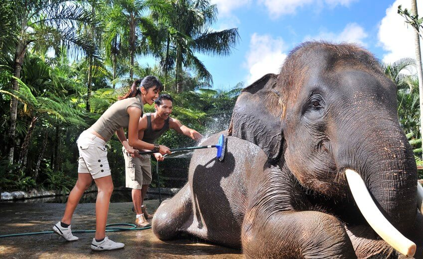 Bath and Breakfast with Elephants