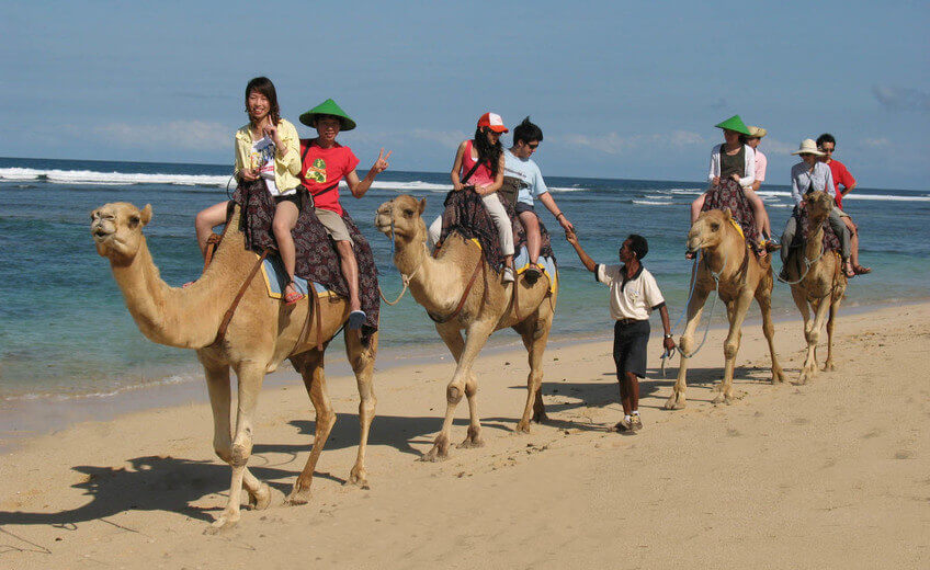 One Hour Camel Riding
