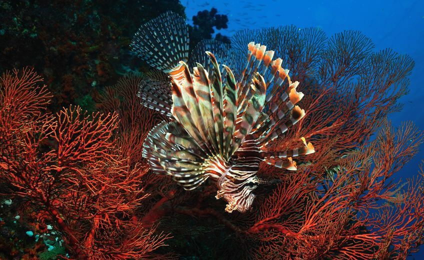 Amed Reef