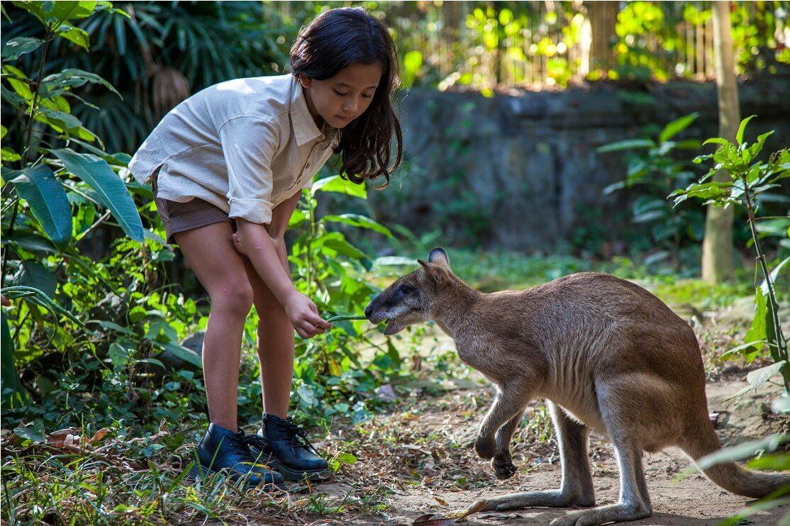 Bali Zoo Tour