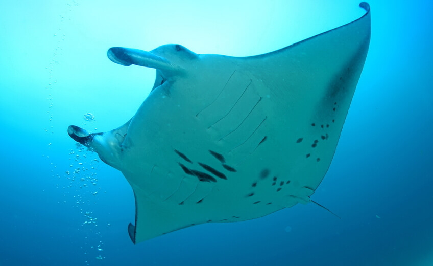 Diving In Manta Point Area - For Certified Divers