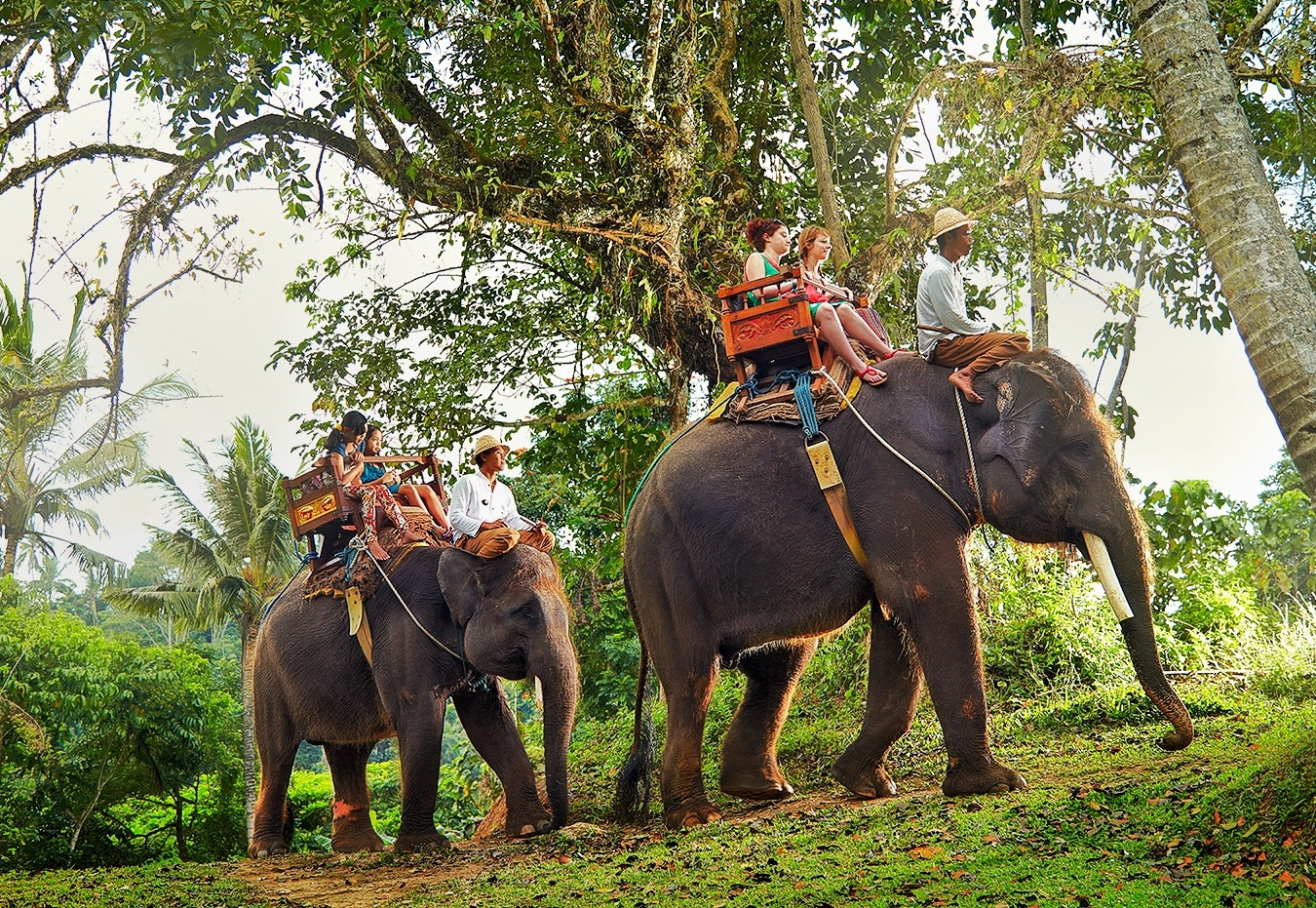 Long Trek Exclusive Elephant Safari at the Bali Zoo Including Hotel Transfer and Lunch