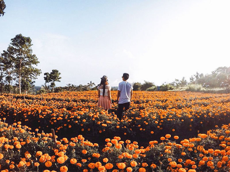 Marigold Fields (Road Trip)